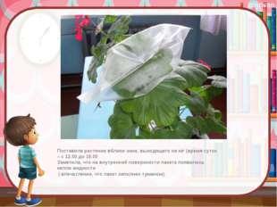 Поставила растение вблизи окна, выходящего на юг (время суток – с 12.00 до 1