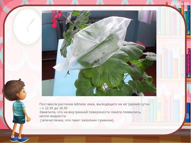 Поставила растение вблизи окна, выходящего на юг (время суток – с 12.00 до 1...