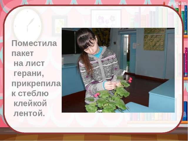 Поместила пакет на лист герани, прикрепила к стеблю клейкой лентой. bayovan