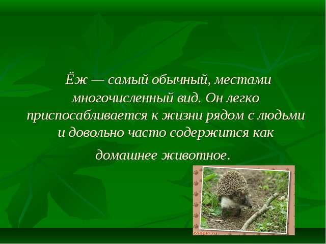 Ёж— самый обычный, местами многочисленный вид. Он легко приспосабливается к...