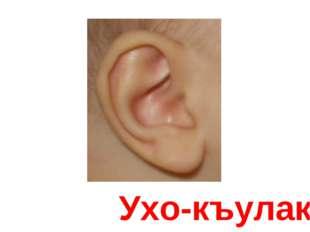 Ухо-къулакъ