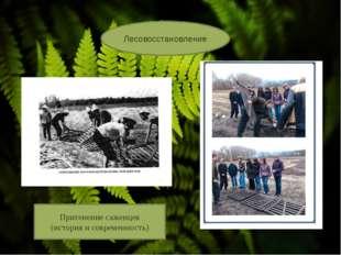 Лесовосстановление Притенение саженцев (история и современность)