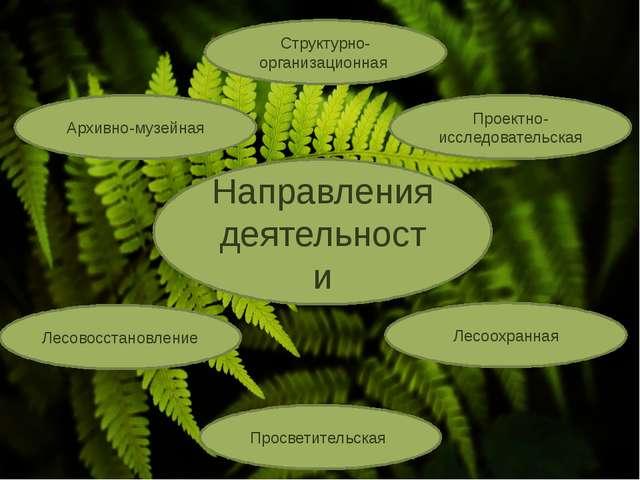 Направления деятельности Просветительская Проектно-исследовательская Структу...
