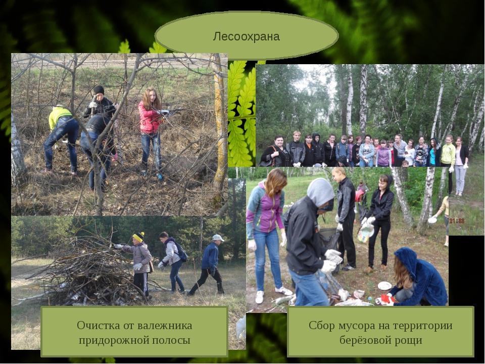 Лесоохрана Сбор мусора на территории берёзовой рощи Очистка от валежника при...