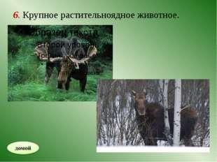 8. Хищник, мех которого высоко ценится.