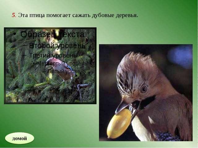 6. Крупное растительноядное животное.