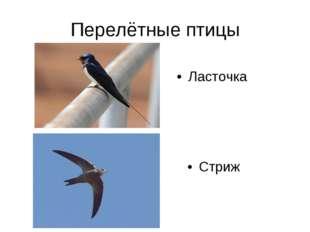 Перелётные птицы Стриж Ласточка