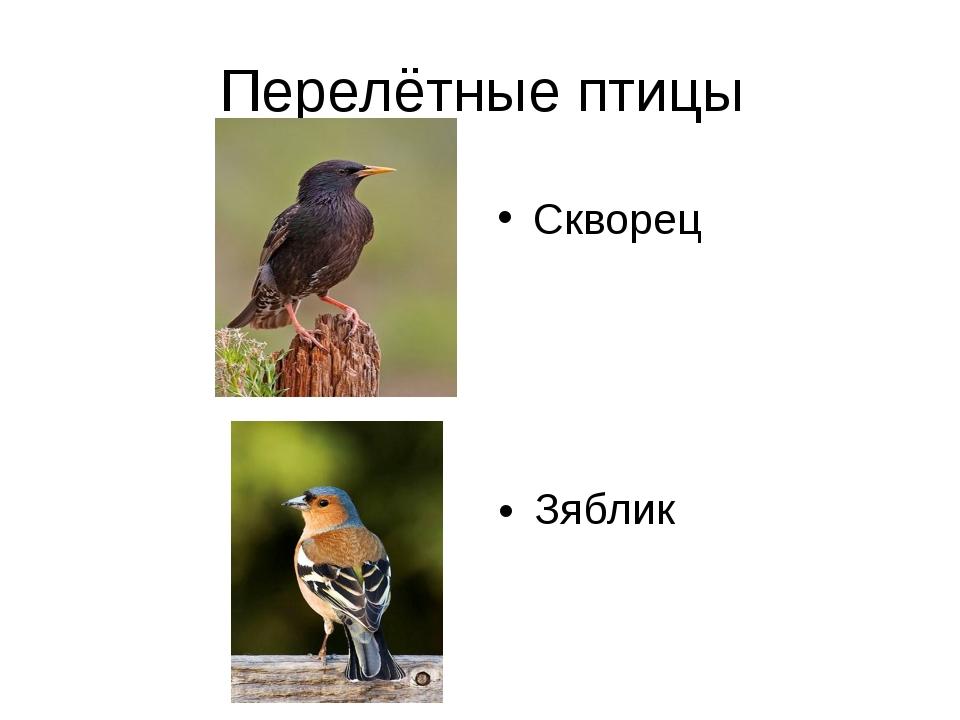 Перелётные птицы Скворец Зяблик