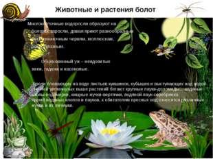 Животные и растения болот Многоклеточные водоросли образуют на болотах заросл