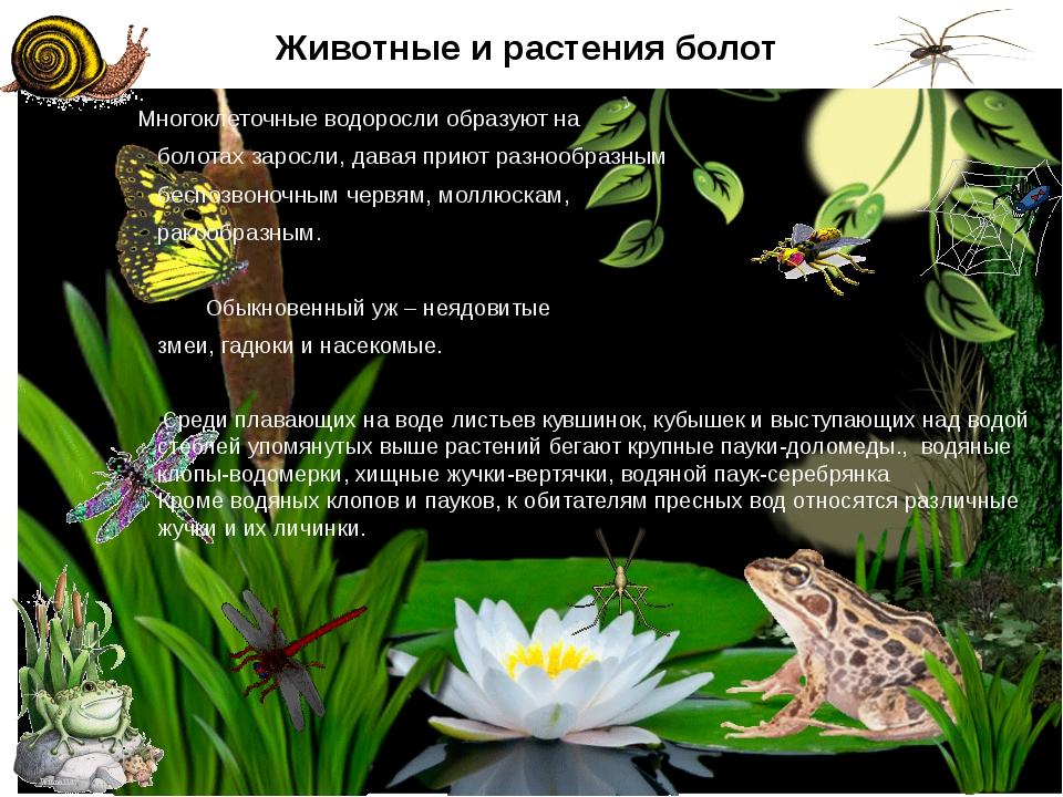 Животные и растения болот Многоклеточные водоросли образуют на болотах заросл...