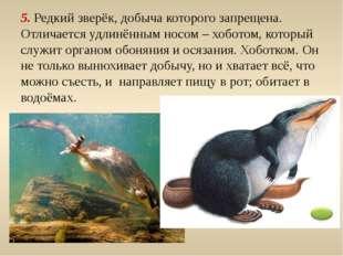 6. Травоядное животное – современник мамонта. Имеет быстрые ноги. Скорость бе