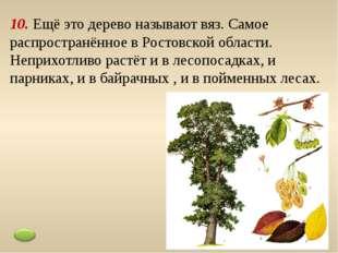 9. Распространённое дерево пойменных лесов, укрепляет берега водоёмов. Очень