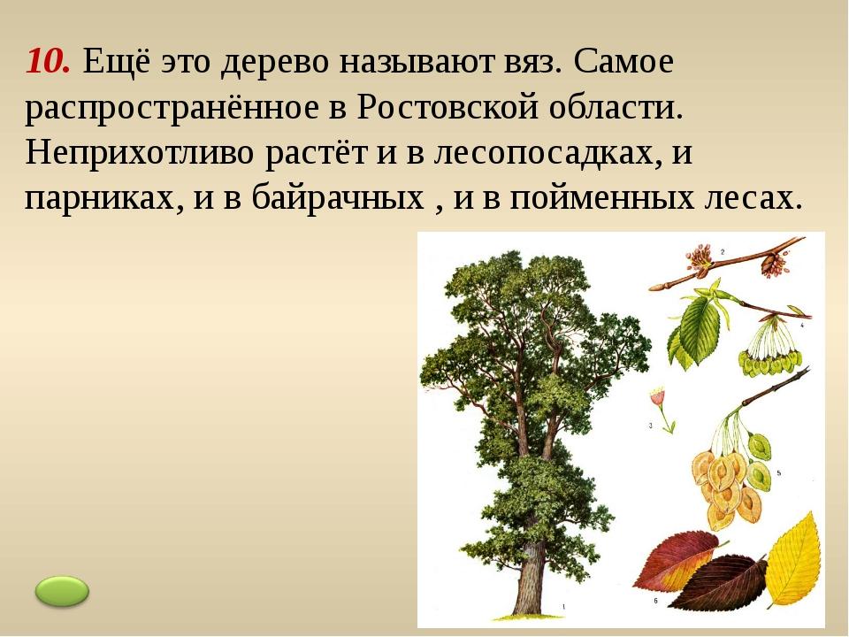 9. Распространённое дерево пойменных лесов, укрепляет берега водоёмов. Очень...
