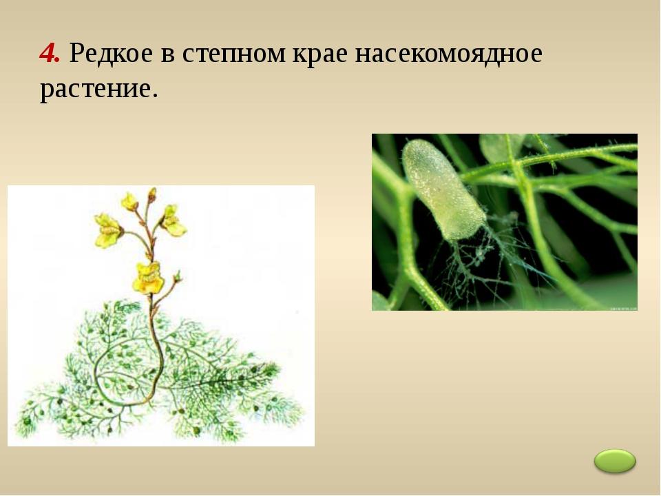 4. Редкое в степном крае насекомоядное растение.