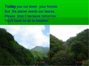 Today you cut down your forests But the planet needs our leaves. Please stop