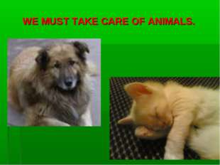 WE MUST TAKE CARE OF ANIMALS.