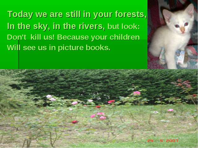Today we are still in your forests, In the sky, in the rivers, but look: Don'...