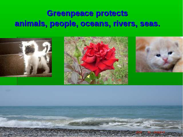 Greenpeace protects animals, people, oceans, rivers, seas.