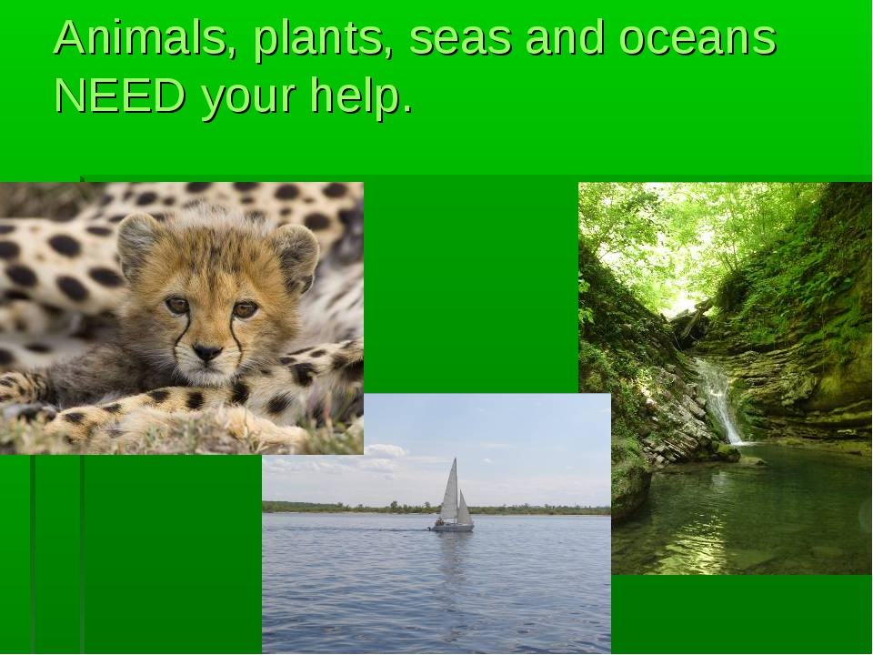 Animals, plants, seas and oceans NEED your help.