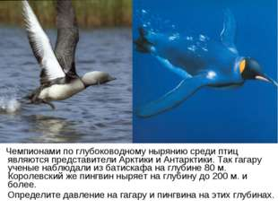 Чемпионами по глубоководному нырянию среди птиц являются представители Аркти