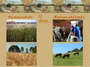 Растениеводство Животноводство II звено :