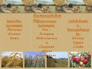 Зерновые культуры: Пшеница Ячмень Рожь Технические культуры: Лен – долгунец П