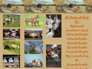 Животноводство: Крупный рогатый скот Свиноводство Овцеводство Козоводство Кон