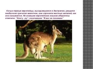 Когда первые европейцы, высадившиеся в Австралии, увидели необычное сумчатое