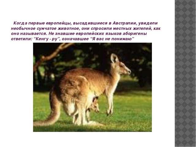 Когда первые европейцы, высадившиеся в Австралии, увидели необычное сумчатое...
