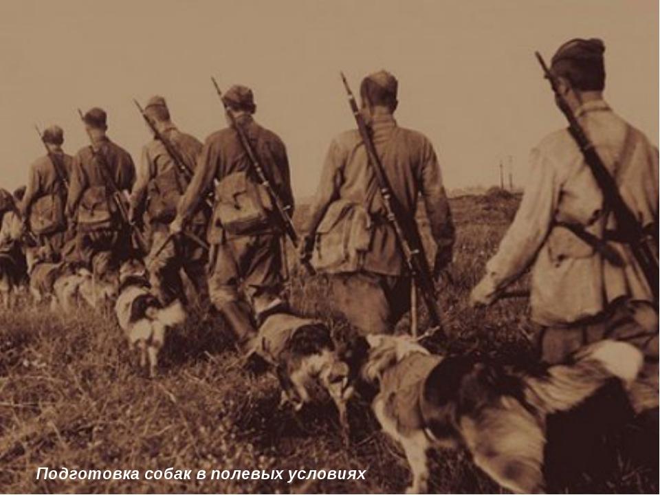 Подготовка собак в полевых условиях