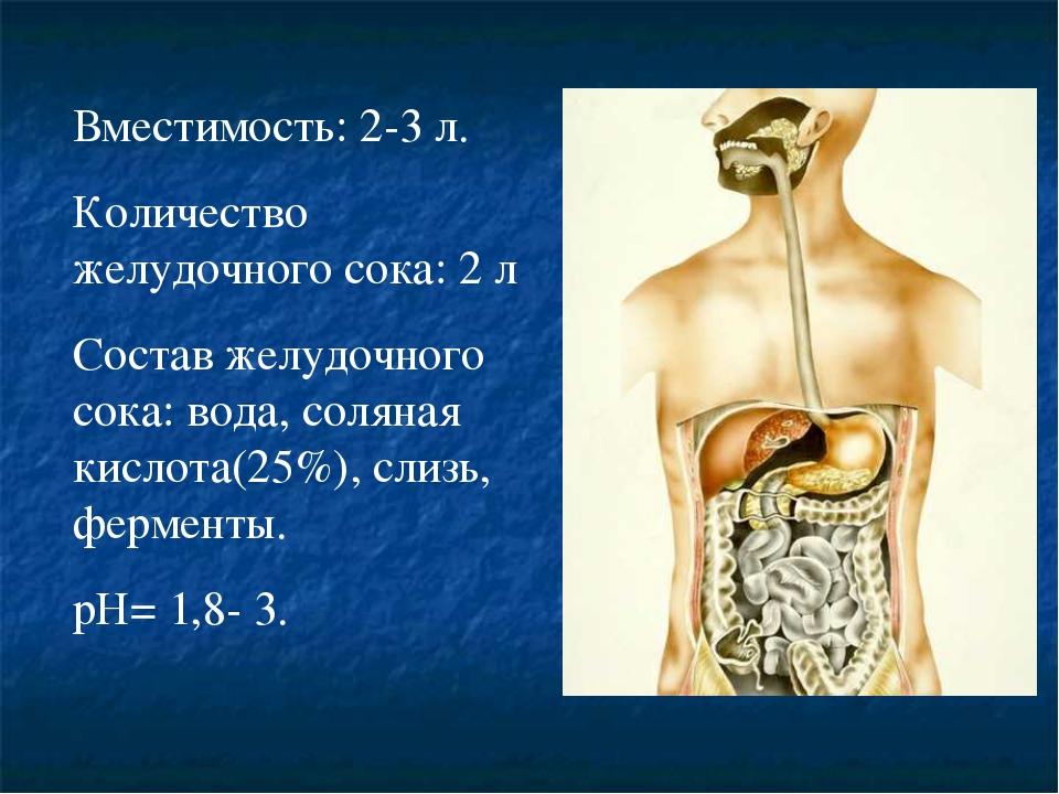 Вместимость: 2-3 л. Количество желудочного сока: 2 л Состав желудочного сока:...