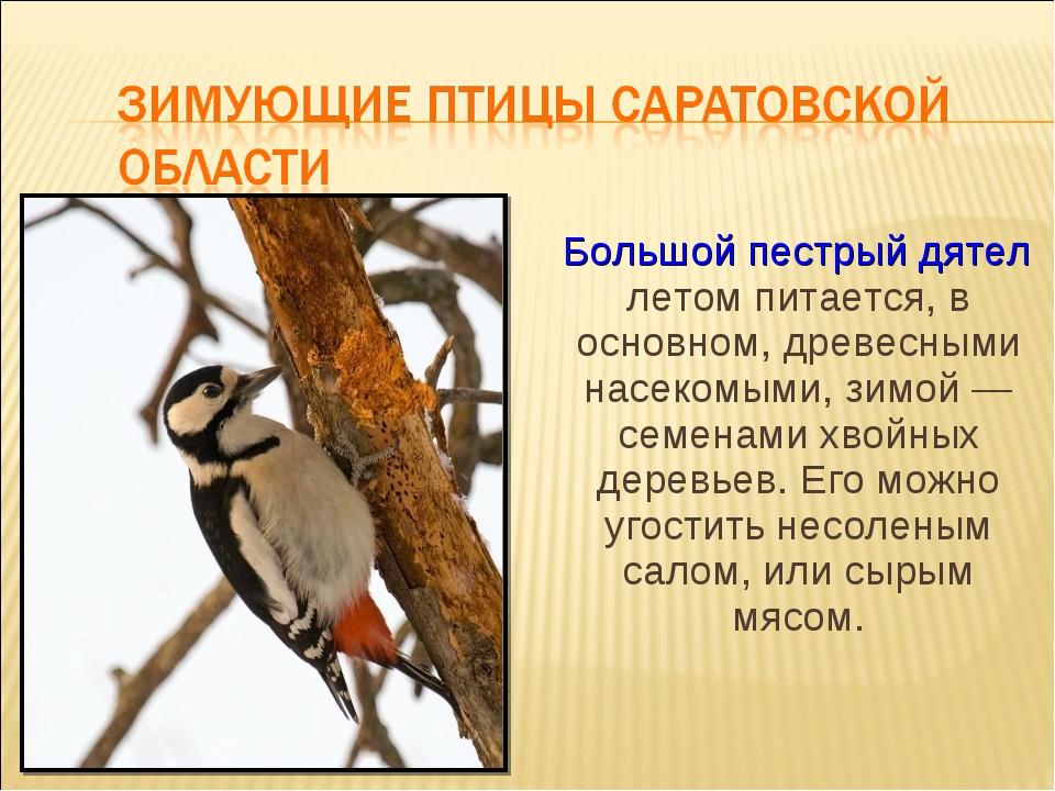Большой пестрый дятел летом питается, в основном, древесными насекомыми, зим...