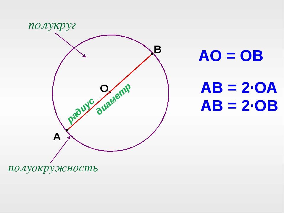О А В радиус диаметр АО = ОВ АВ = 2·ОА АВ = 2·ОВ полуокружность полукруг