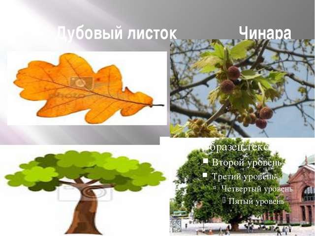 Дубовый листок Чинара