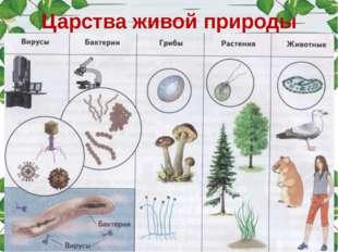 Царства живой природы