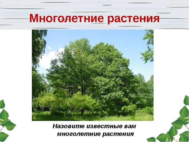 Назовите известные вам многолетние растения Многолетние растения