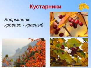 Кустарники Боярышник кроваво - красный