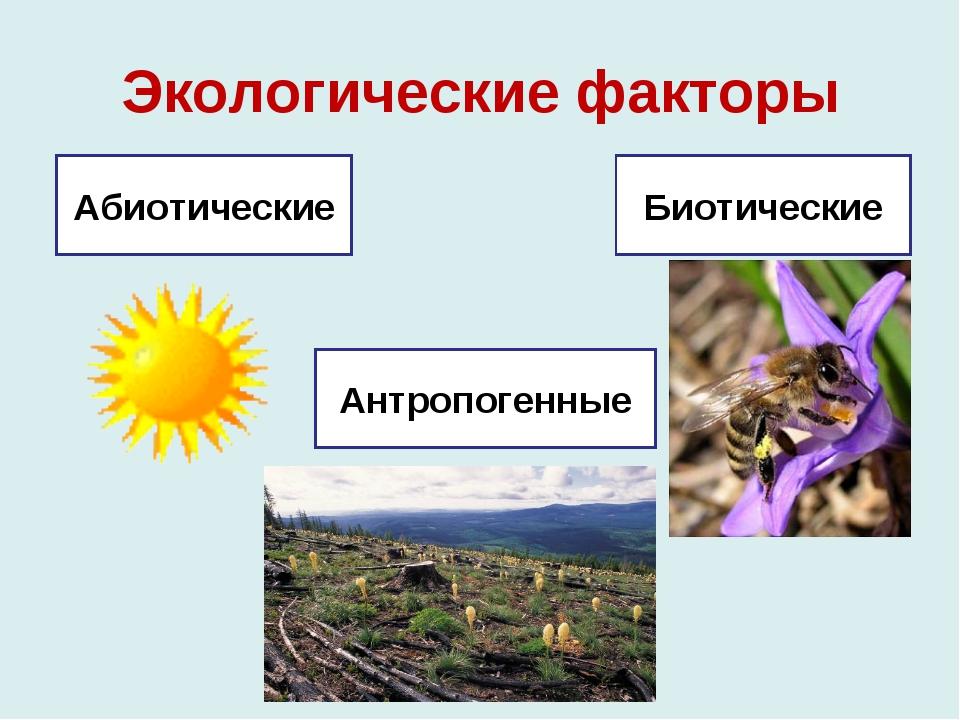 Экологические факторы Абиотические Антропогенные Биотические