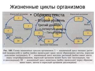 Жизненные циклы организмов