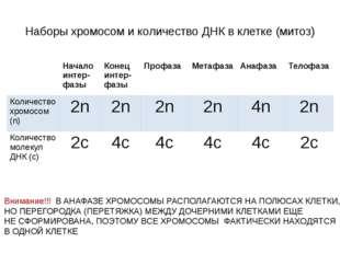 Наборы хромосом и количество ДНК в клетке (митоз)