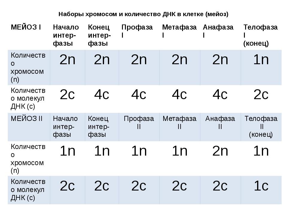 Наборы хромосом и количество ДНК в клетке (мейоз)