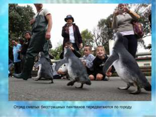Отряд смелых бесстрашных пингвинов передвигаются по городу.