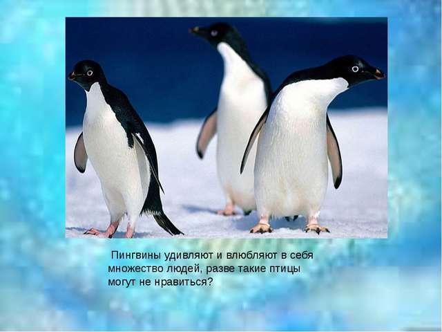 Пингвины удивляют и влюбляют в себя множество людей, разве такие птицы могут...
