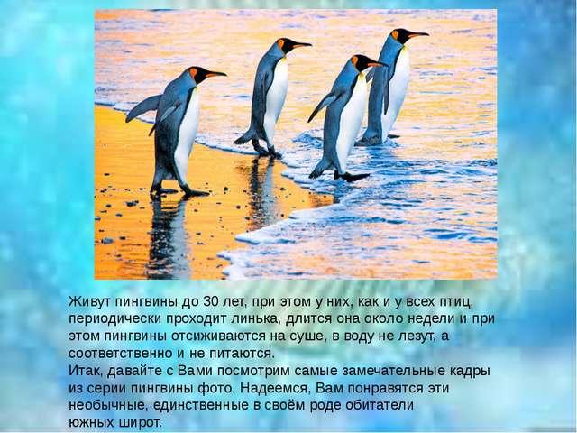 Живут пингвины до 30 лет, при этом у них, как и у всех птиц, периодически про...