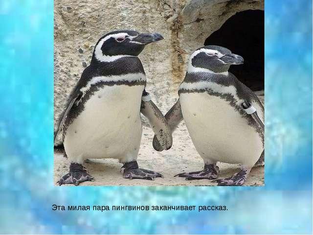 Эта милая пара пингвинов заканчивает рассказ.