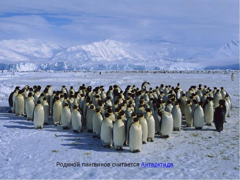 Родиной пингвинов считаетсяАнтарктида.