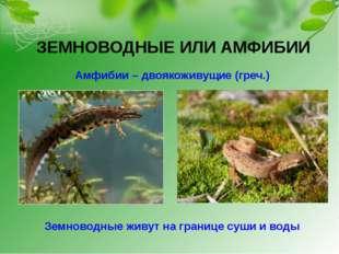 ЗЕМНОВОДНЫЕ ИЛИ АМФИБИИ Амфибии – двоякоживущие (греч.) Земноводные живут на