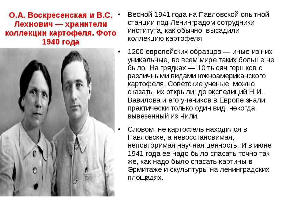 О.А. Воскресенская и В.С. Лехнович —хранители коллекции картофеля. Фото 1940...