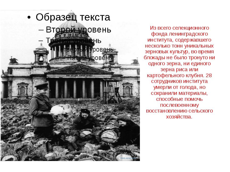 Из всего селекционного фонда ленинградского института, содержавшего несколько...