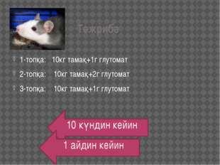 Тәжрибә 1-топқа: 10кг тамақ+1г глутомат 2-топқа: 10кг тамақ+2г глутомат 3-топ
